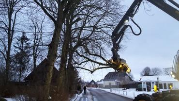 Beskæring af træer - januar 2016
